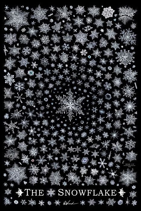 00 400 snowflake photos to scale